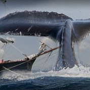 The Pursuit of Moby Dick